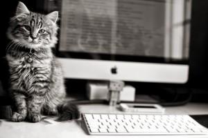 cute cats wallpaper download