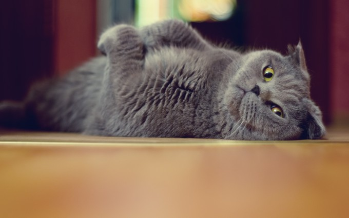 cute cats wallpapers for desktop