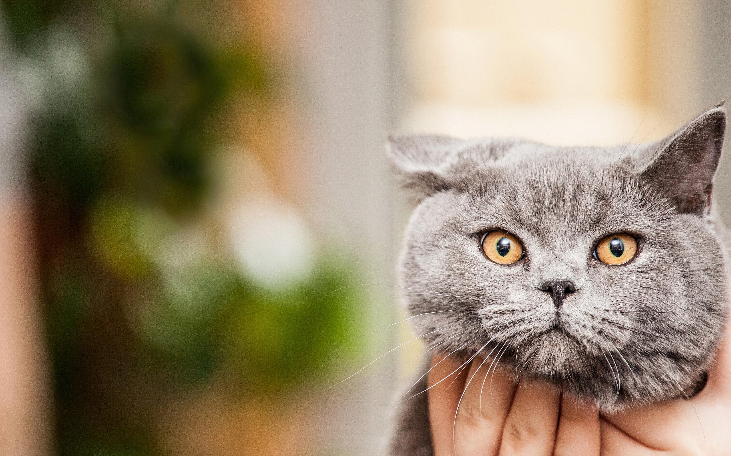Cute Cats Wallpapers Hd Hd Desktop Wallpapers 4k Hd