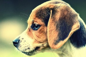 cute dog backgrounds
