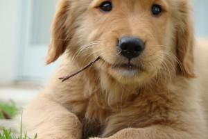 cute dog wallpaper hd