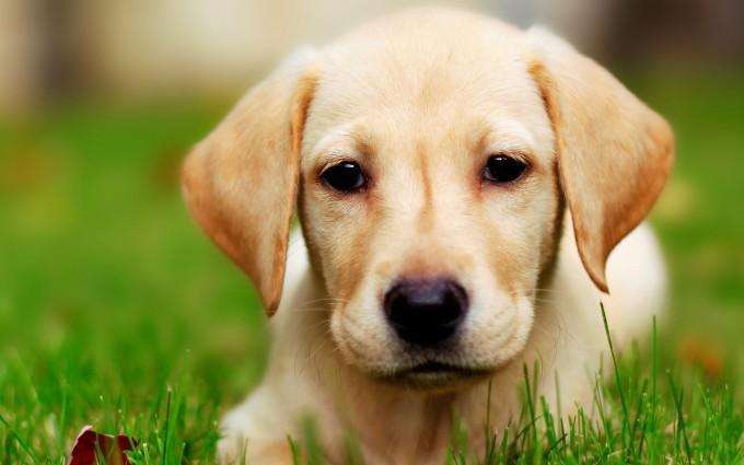 cute dogs A10