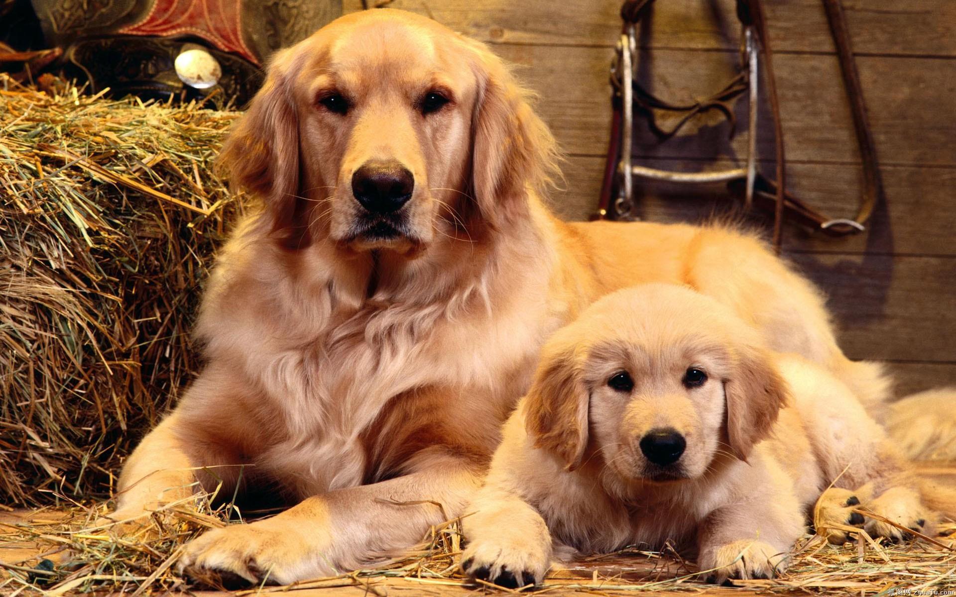 cute dogs A4