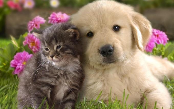 cute dogs a1