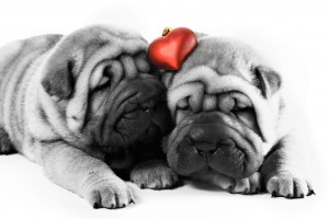 cute dogs pictures