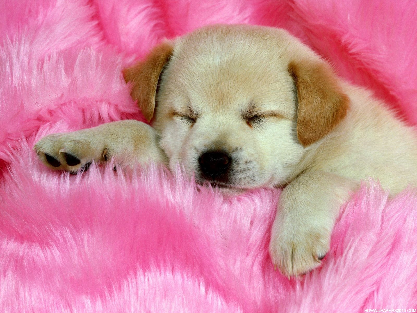 cute dogs wallpapers free download
