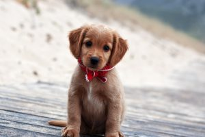 cute dogs wallpapers