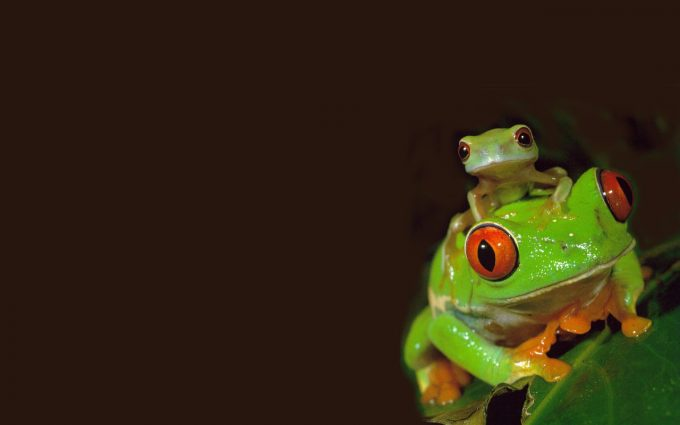 cute frog wallpapers
