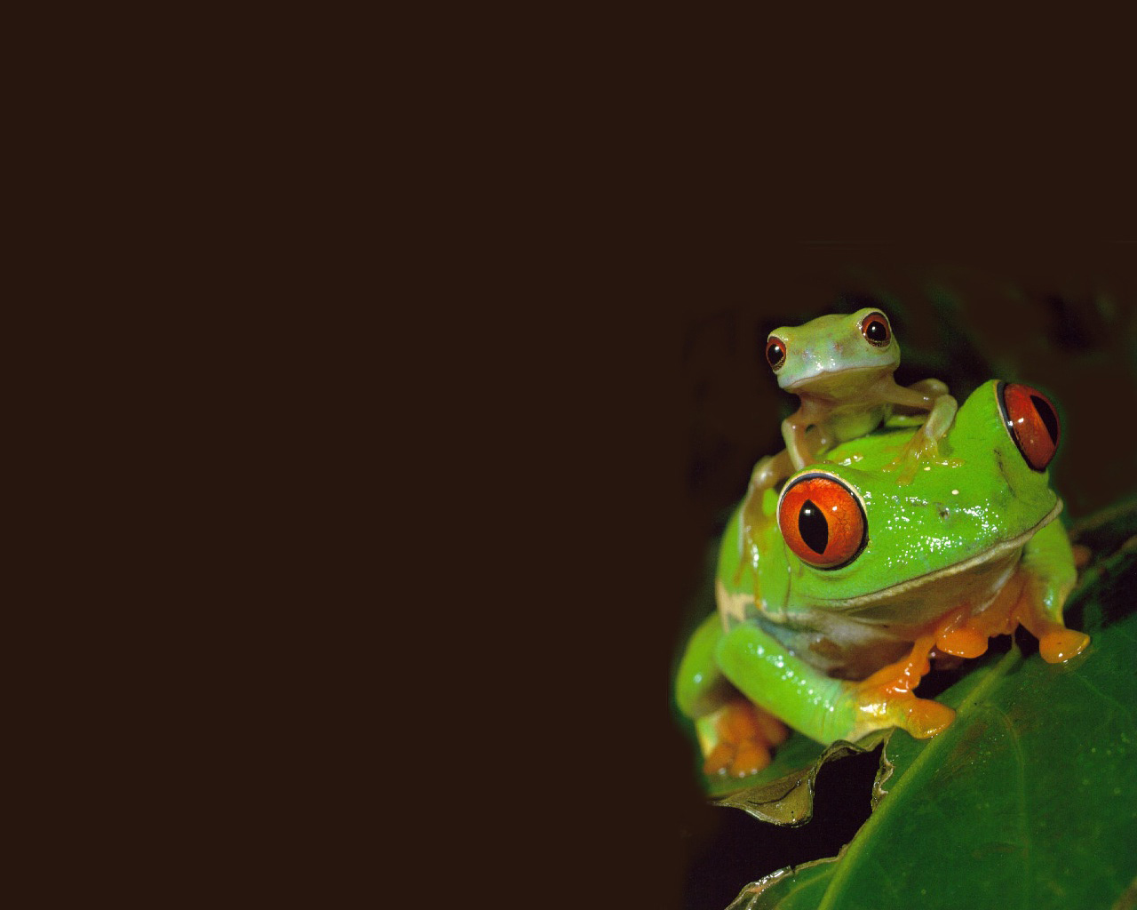 cute frog wallpapers