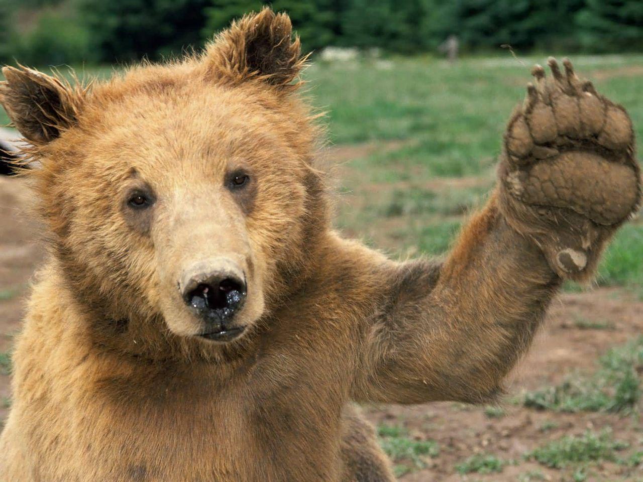 cute image bear