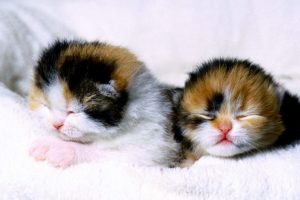 cute kitten pictures wallpaper