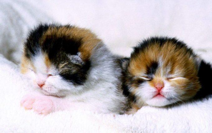 cute kitten pictures wallpaper