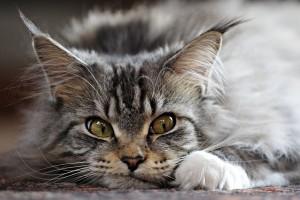 cute kitten wallpaper free download