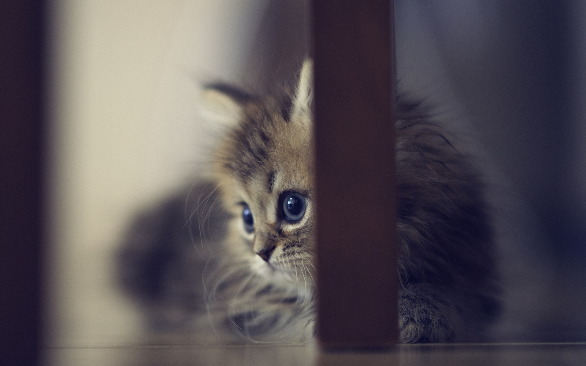 cute kitten wallpaper free download