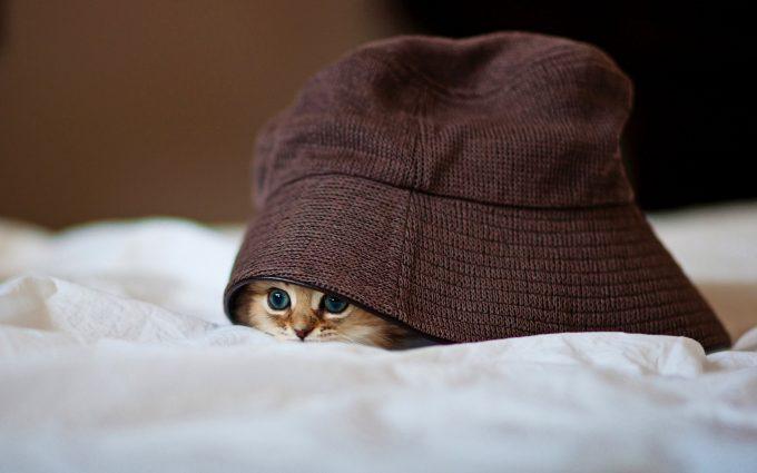 cute kitty cat image