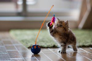 cute kitty hd wallpaper