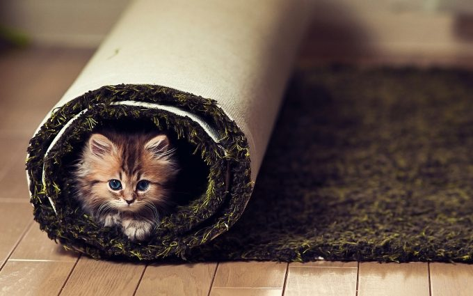 cute kitty wallpaper cats