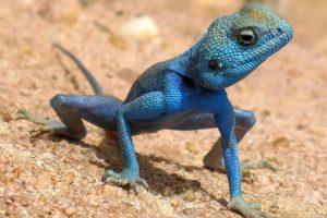 cute lizard pictures