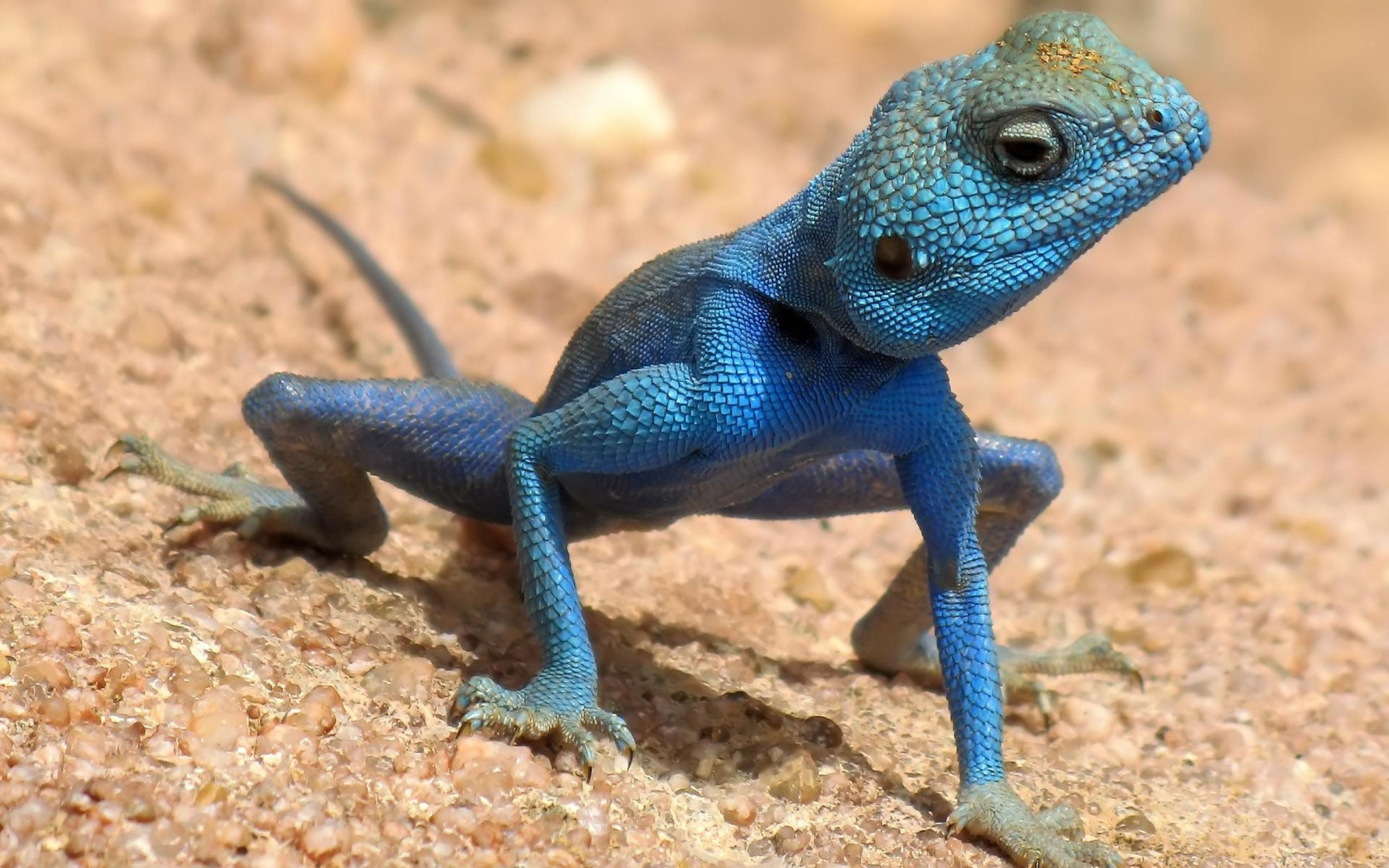 cute lizard pictures