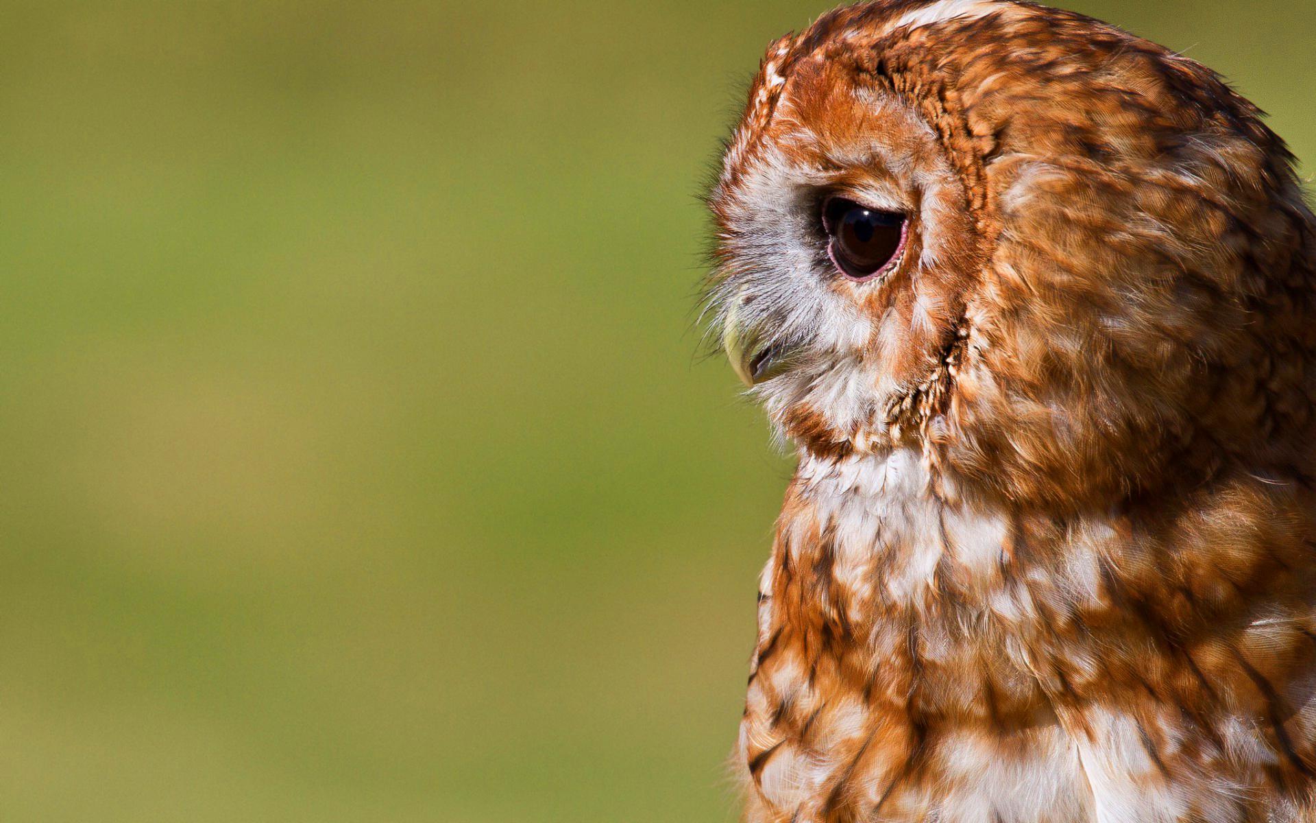 cute owl bird