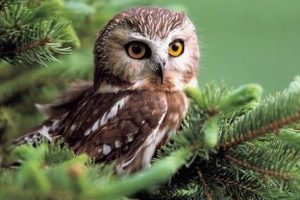 cute owl desktop wallpaper