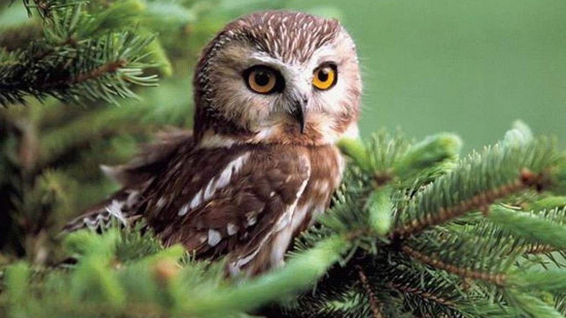 cute Owl Love Wallpaper : cute owl desktop wallpaper - HD Desktop Wallpapers 4k HD