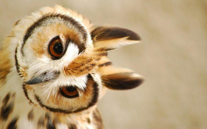 cute owl screensaver