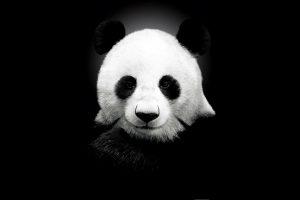 cute panda hd