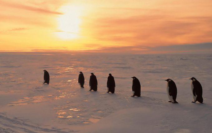 cute penguin wallpaper