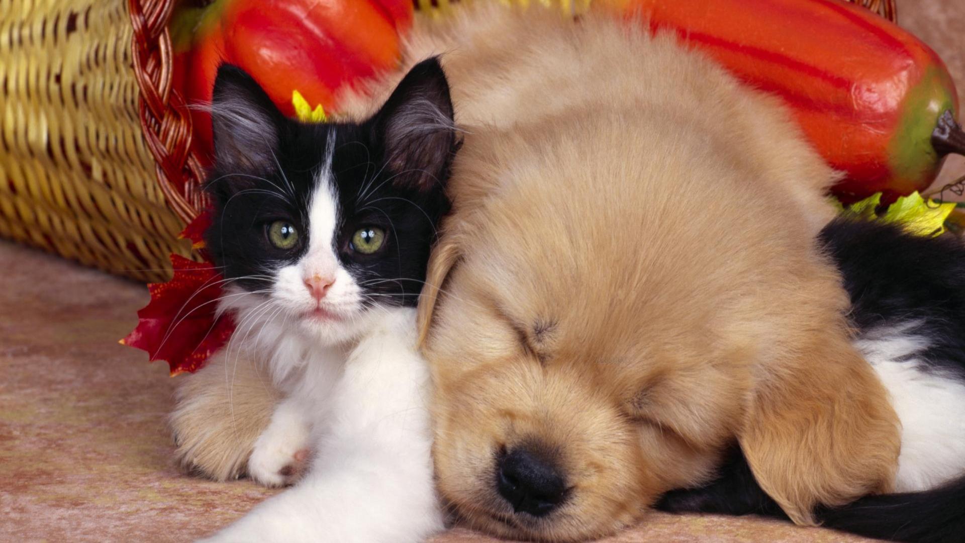 cute pets A2
