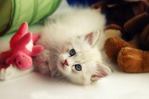 cute pets A3