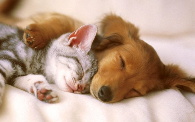 cute pets A6