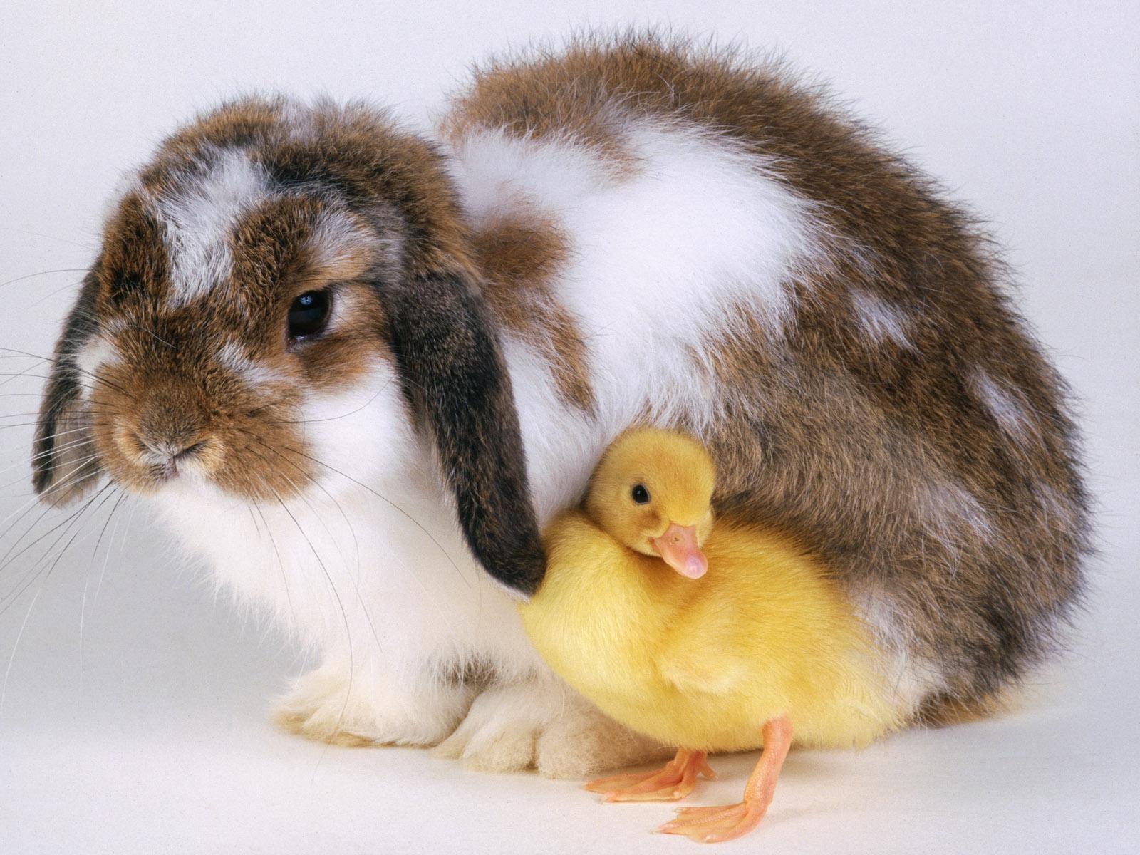 cute pets A8
