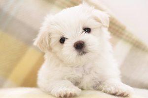cute pets wallpaper A10
