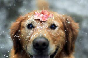cute pets wallpaper A11