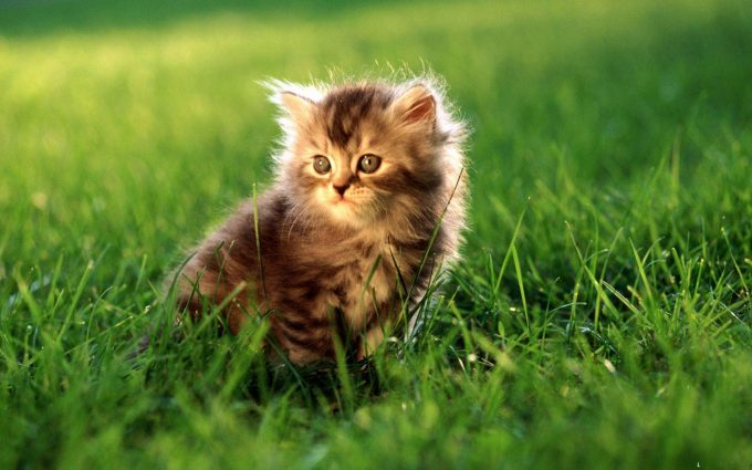 cute pictures animals