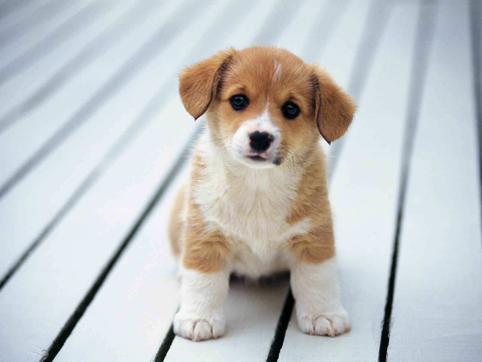 cute puppy A3