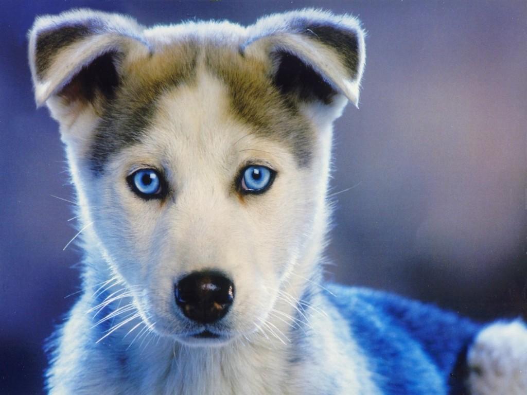 cute puppy A4