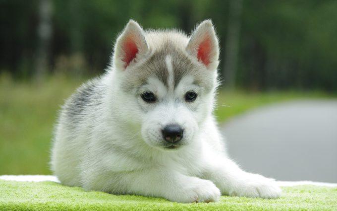 cute puppy A5