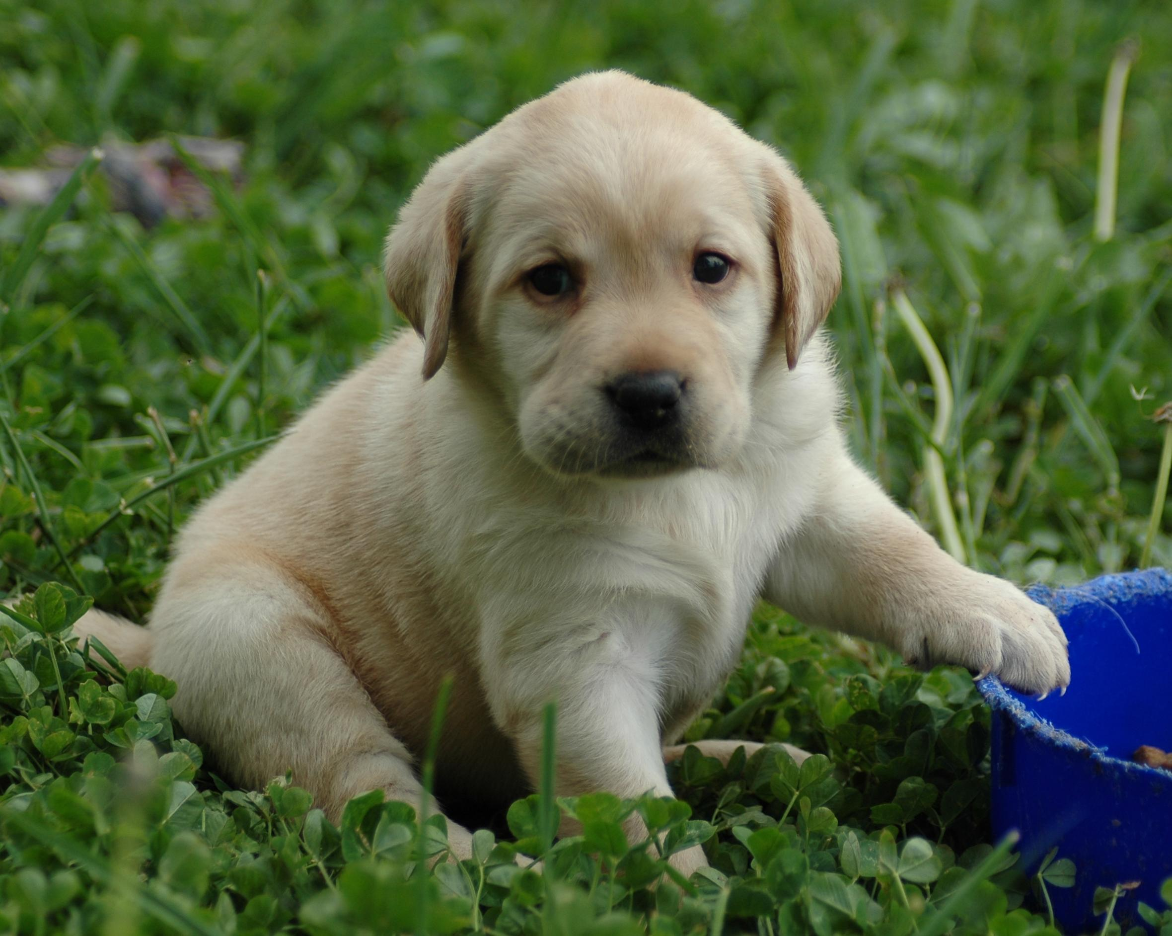 cute puppy A6