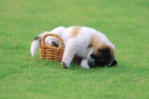 cute puppy background