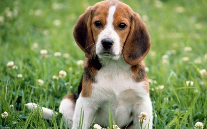 cute puppy dog wallpapers