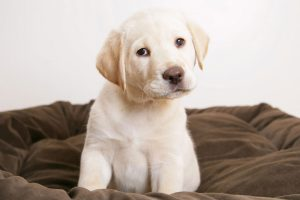 cute puppy pictures A11