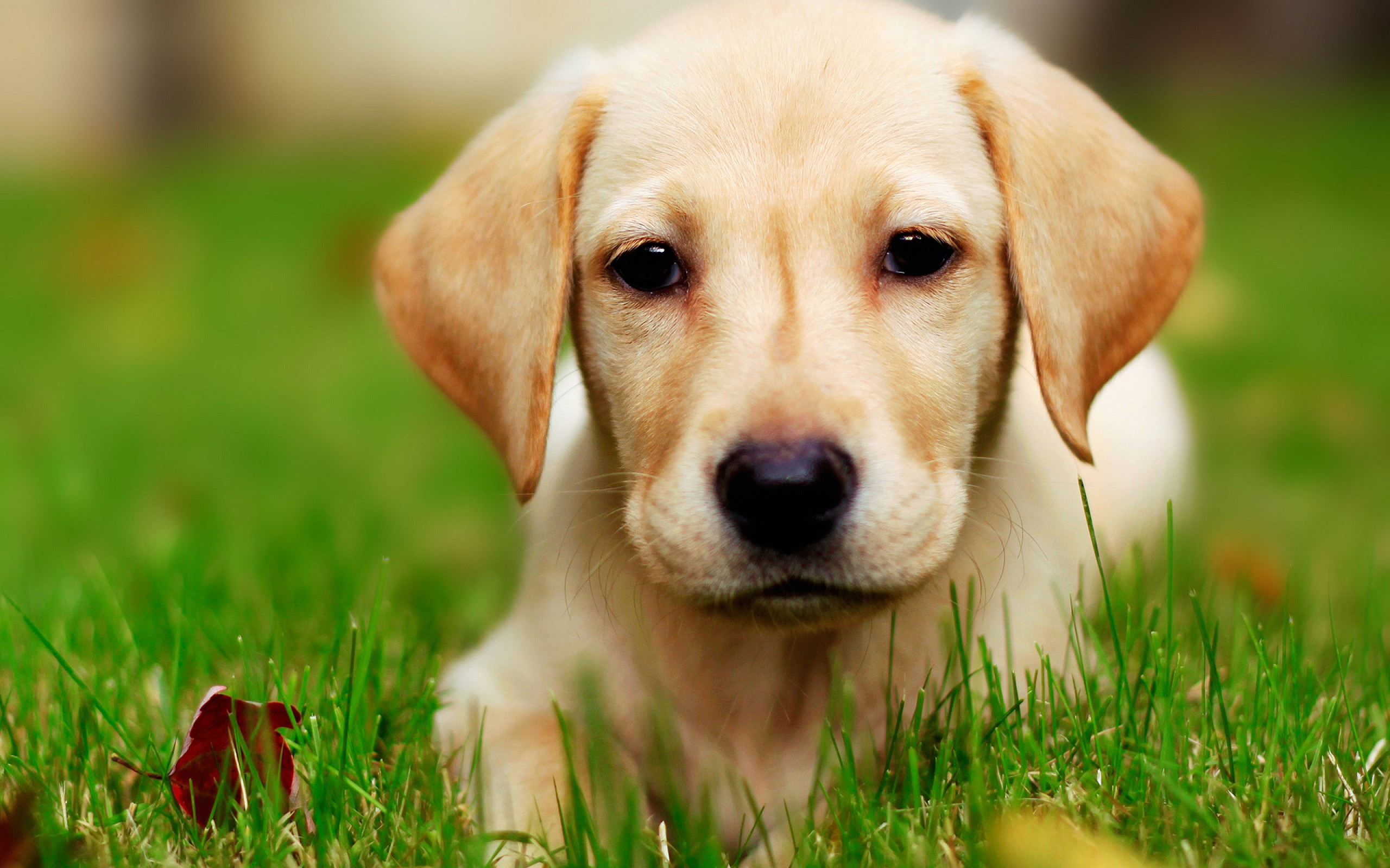 cute puppy pictures A2
