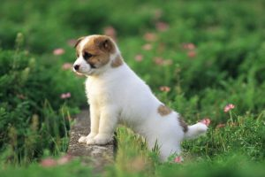 cute puppy pictures A4