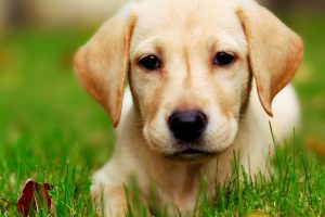 cute puppy pictures A7