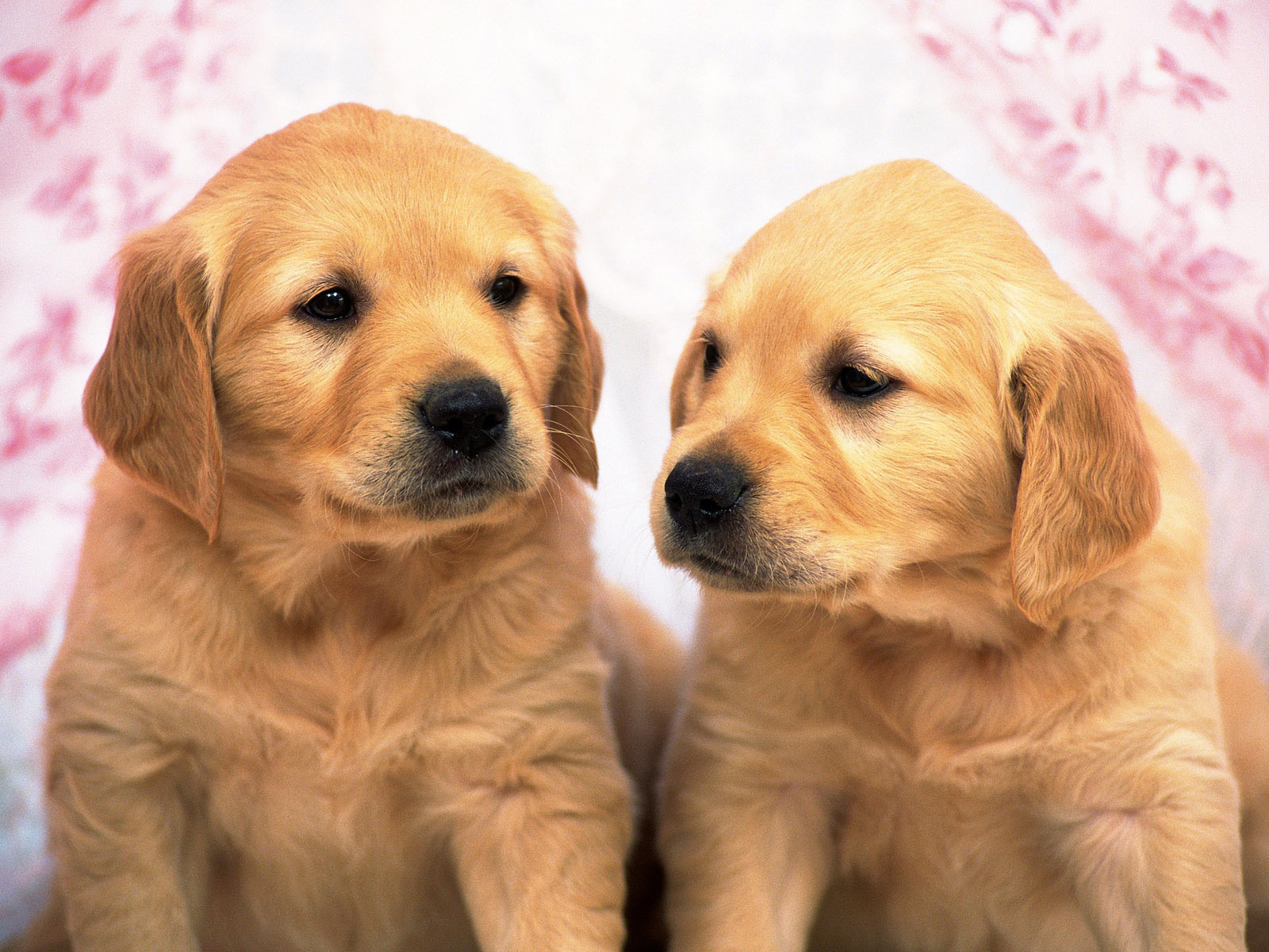 cute puppy pictures A9