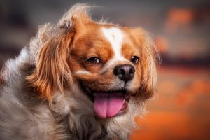 cute puppy wallpapers A3