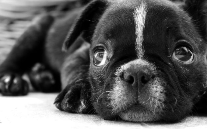 cute puppy wallpapers A4