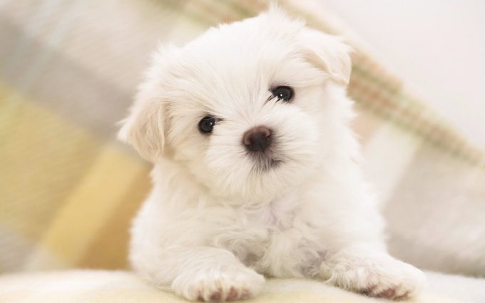 cute puppy wallpapers A5